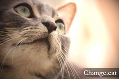 Chacha Change.cat (chachainusa) Tags: animal cat planet chacha blueribbonwinner mywinners goldenheartaward changecat chachainusa