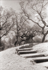 Fort Matanzas Path (Jamie Powell Sheppard) Tags: trees blackandwhite bw art film ir photo florida nps path fineart canonae1program sepiatone 50mmlens 35mmslr femalephotographer hc110dilb woodeffect fortmatanzasnationalmonument 29darkredfilter kodakhiebwinfrared