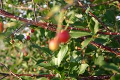 (Reza-ir) Tags: tree nature iran dam sourcherry mashhad sluice khorasan