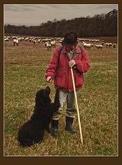 A juhsz s trsa (skriszta) Tags: dog hungary sheep shepherd sheepdog kutya magyarorszg olympusc4040z juhsz
