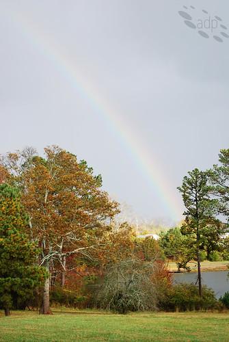 ADP_Rainbow[2008]