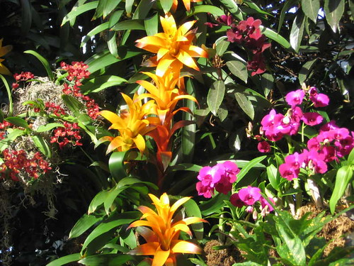 Orchids and bromeliads