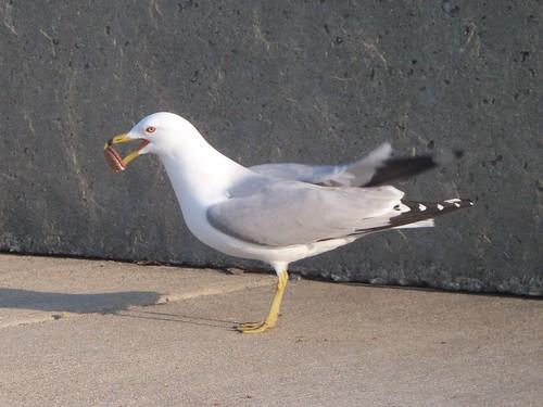 3.22.2009 Chicago Natura (28) b