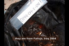 they are from Falluja, Iraq 2005