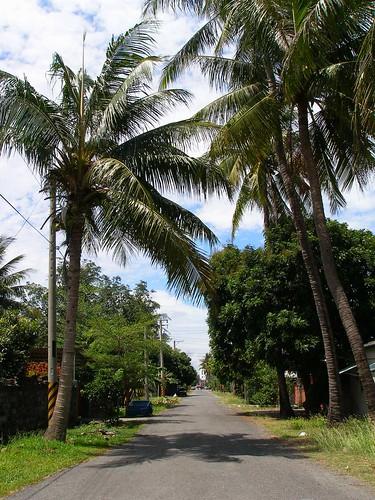 椰林道.JPG