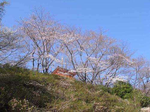 09-03-23【桜】@和歌山・青岸渡寺-02