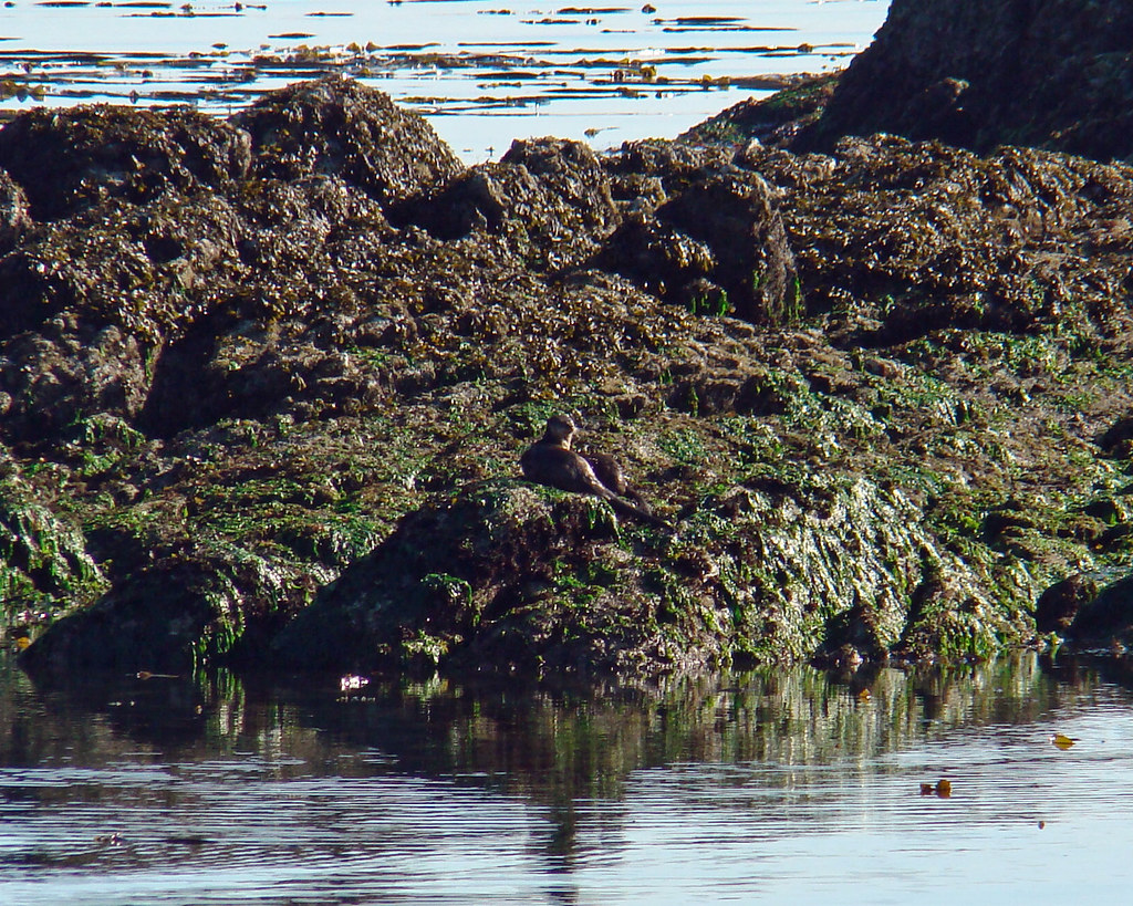 2009-07-19-Telegraph Bay 016