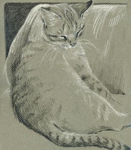 Merlin in Gray
