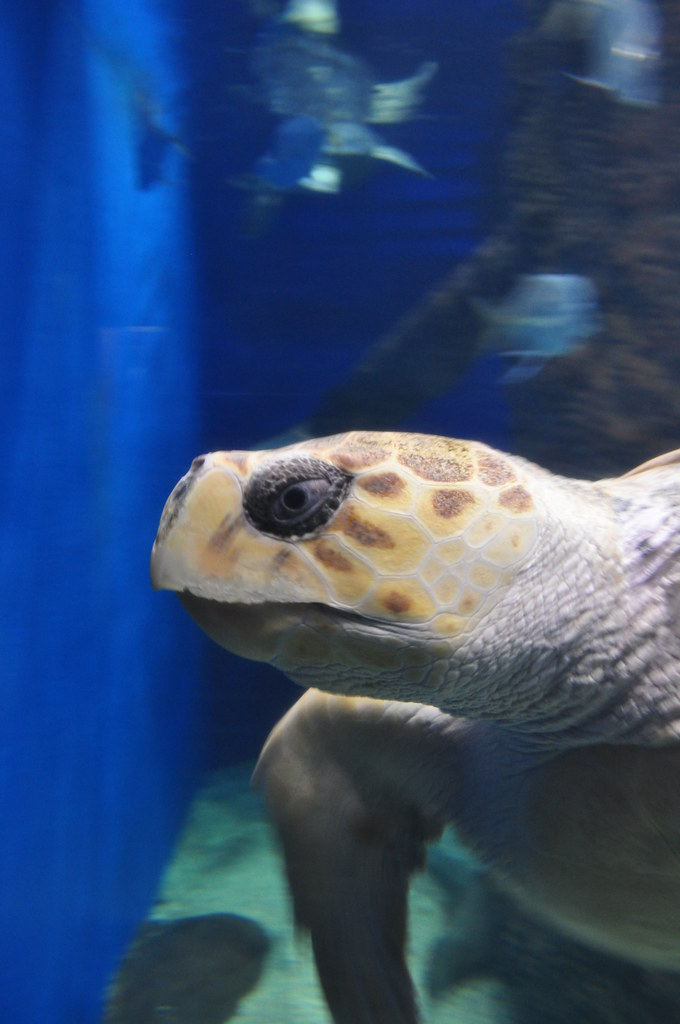 Sea Turtle 5