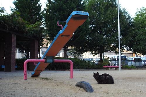濃いグレーの猫