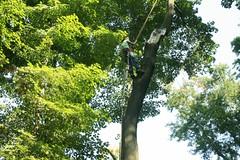 _MG_6392.JPG (zimbablade) Tags: trees sleepyhollow dougmiller videopoem