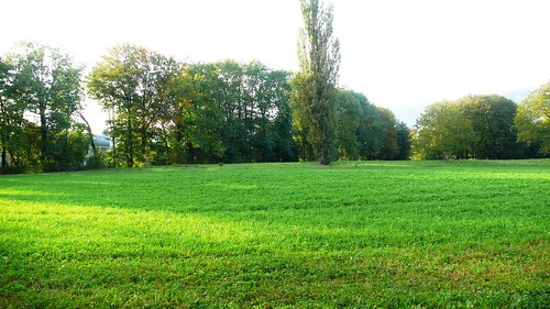 Field along the River Aare