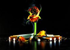 لا تقتل زهرة شبآبك (7LM) Tags: وردة دخان مارلبورو 7lm xx7lmxx