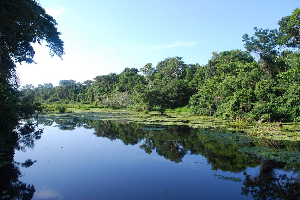 Brazil Rio To The Amazon Rainforest