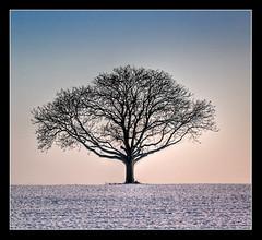 Waiting for Spring (zozma*) Tags: winter france tree hiver arbre hdr lonelytree poitou blueribbonwinner 3xp photomatix superaplus aplusphoto hdrenfrancais infinestyle treesubject favemegroup7 theperfectphotographer artofatmosphere