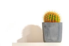 Thorns (by Erik Rozendaal)