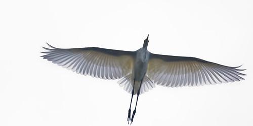 Egret i think