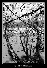 Frozen lake (Marc Backes Photography) Tags: trees winter blackandwhite lake noiretblanc hiver luxembourg schwarzweiss luxemburg kockelscheuer