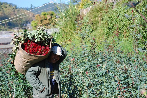 Benguet Bahung La Trinidad Flower Farm