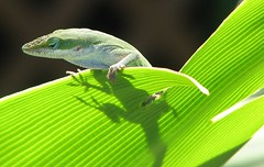The Hang Out (G.Park) Tags: green nature reptile wildlife lizzard animalplanet potofgold