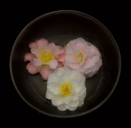 Three Camellia Blossoms in a Bowl