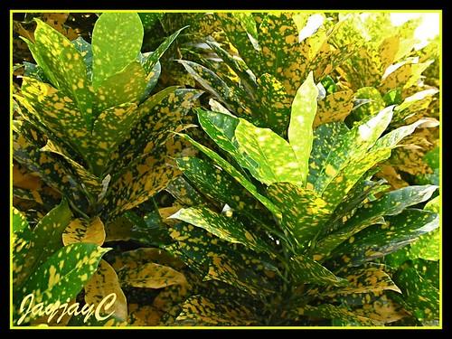 ملف يضم كل شئ عن نباتات الزينه .. 3365339054_9763a9f438