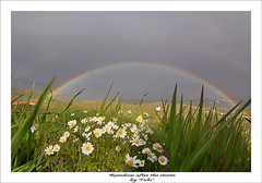 Rainbow after the storm. (tolis*) Tags: storm rain daisies canon island rainbow tokina greece chios 50d eos50d tolis    vosplusbellesphotos flioukas