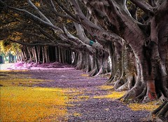 A way to walk in peace (Serlunar) Tags: park parque trees way de flickr do peace place walk branches magic fotos ibirapuera arvores tronco mystic raizes fora otw a premiadas kartpostal totalphoto photographyrocks misticas theperfectphotographer goldstaraward thebestofday gnneniyisi serlunar