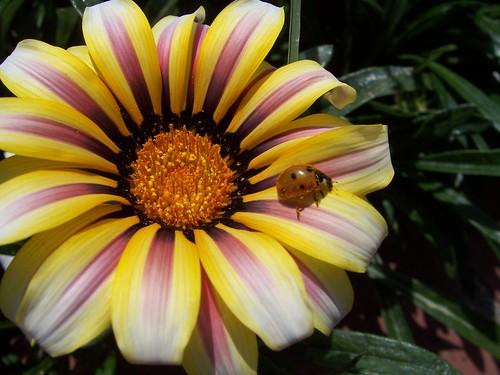 freddie the ladybug