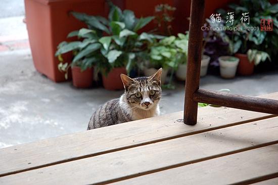 Cat。貓薄荷。探頭01