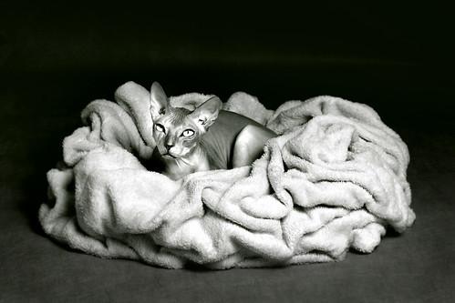 Cat Bruso in da nest