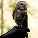 Woodland Park Zoo Seattle 064