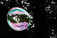 "each one's life is a small bubble, it must burst once!~ (""Anwaar) Tags: life uk pink white black green me colors wales is photographer purple bokeh background united small cardiff kingdom it bubble daisy burst must ones each kuwaiti abigfave goldstaraward anwaar lifeinsevenpages"