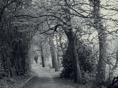Woodland path - by ~Duncan~