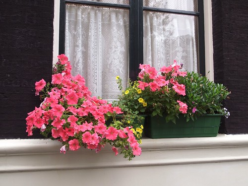 Amsterdam: windowsill flowers