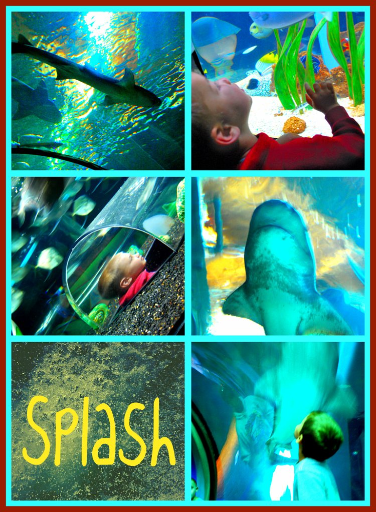 Picnik collage-Splash