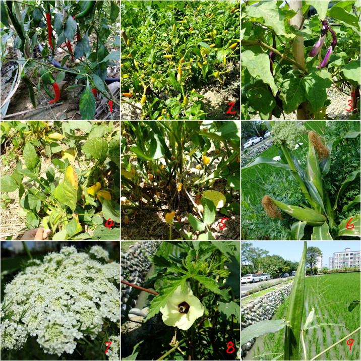 植物檔.jpg