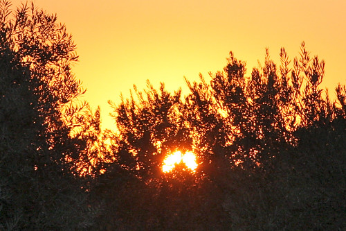 Setting Sun Through Trees