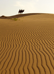 Mongolia  (tongroLEE) Tags: people nature silhouette vertical outdoors sand nikon desert patterns mongolia camel twopeople scenics     inarow          tongro tongrolee