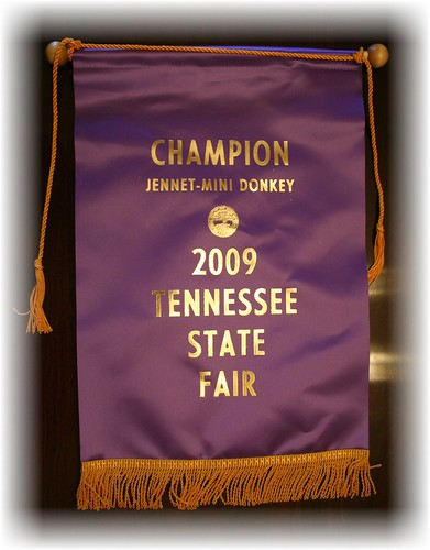 Tennessee State Fair Grand Champion Miniature Donkey Jennet
