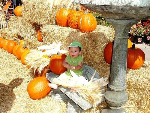 child in pumpkin patch