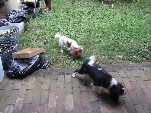 Some random dogs showed up