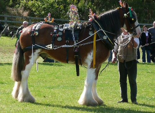 Decorated Clydesdale