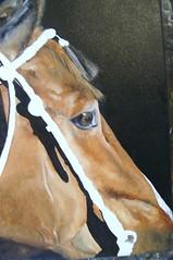 HORSE (donatellaribezzo) Tags: horses horse dog art dogs animal animals cane work painting mammal paint oil works mammals cavallo cani donatella pittrice ribezzo