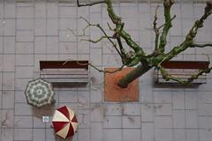 (zapica) Tags: street anna tree rain umbrella arbol calle lluvia paraguas zapica zapico ltytrx5 estivill annazapicoestivill annazapica