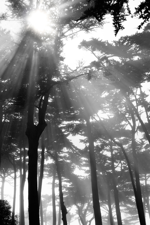 17 mile drive sunbeams through fog