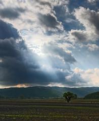 Light impressions - Impressioni di luce (Robyn Hooz) Tags: italy tree ex field grass clouds canon italia nuvole sigma erba campo lonely rays sole albero 1020 solitario vicenza raggi gmt veneto hsm arcugnano 1000d