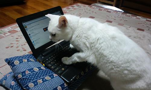 猫はキーボード操作に難があるようです。
