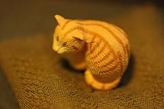 我が家の猫(Cat at my house)