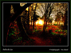 Path to the Sun (Irishphotographer) Tags: autumn trees sunset wallpaper sky irish tree art oneaday sunshine clouds sunrise interesting view colorfull wildlife vivid hills explore elements sureal obama hdr outofthisworld irishart barack kinkade inthecountry flickrsbest coarmagh beautifulireland hdrfrom1raw exploretop20 sunsetshadow peatlands irishphotographer anawesomeshot colorphotoaward flickrdiamond flickrelite theunforgettablepictures imagesofireland colourartaward theperfectphotographer 1rawfile worldwidelandscapes pentaxk20d flickrlovers irishphotographerkimshatwellireland autumnseternityturning irishcalender irishcalender09 irishphotographer irishcountryscene breathtakingphotosofnature beautifulirelandcalander wwwdoublevisionimageswebscom